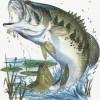 Mississippi Bass Nation